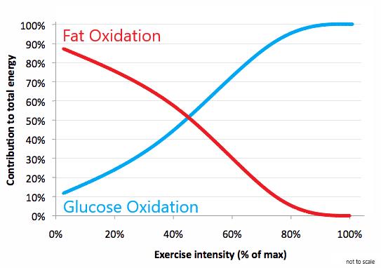 Fat_Glucose_Oxidation